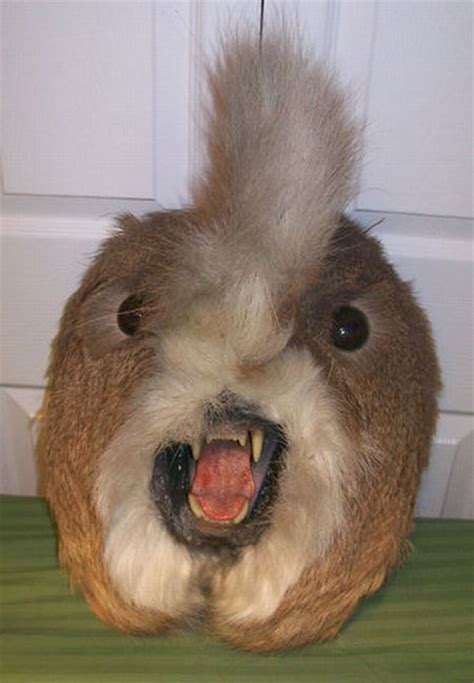 When taxidermy goes wrong (36 pics) - Izismile