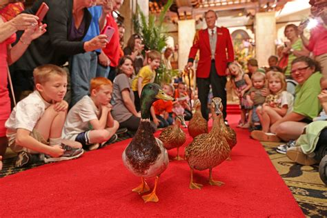 Ducks to March in New Cities as Peabody Hotels Brand