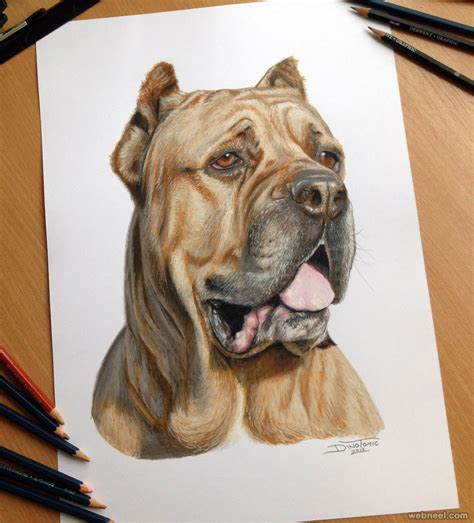 Dog Color Pencil Drawing By Dinotomic 2